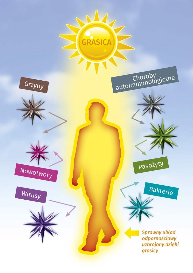 Grasica - klucz do odporności organizmu