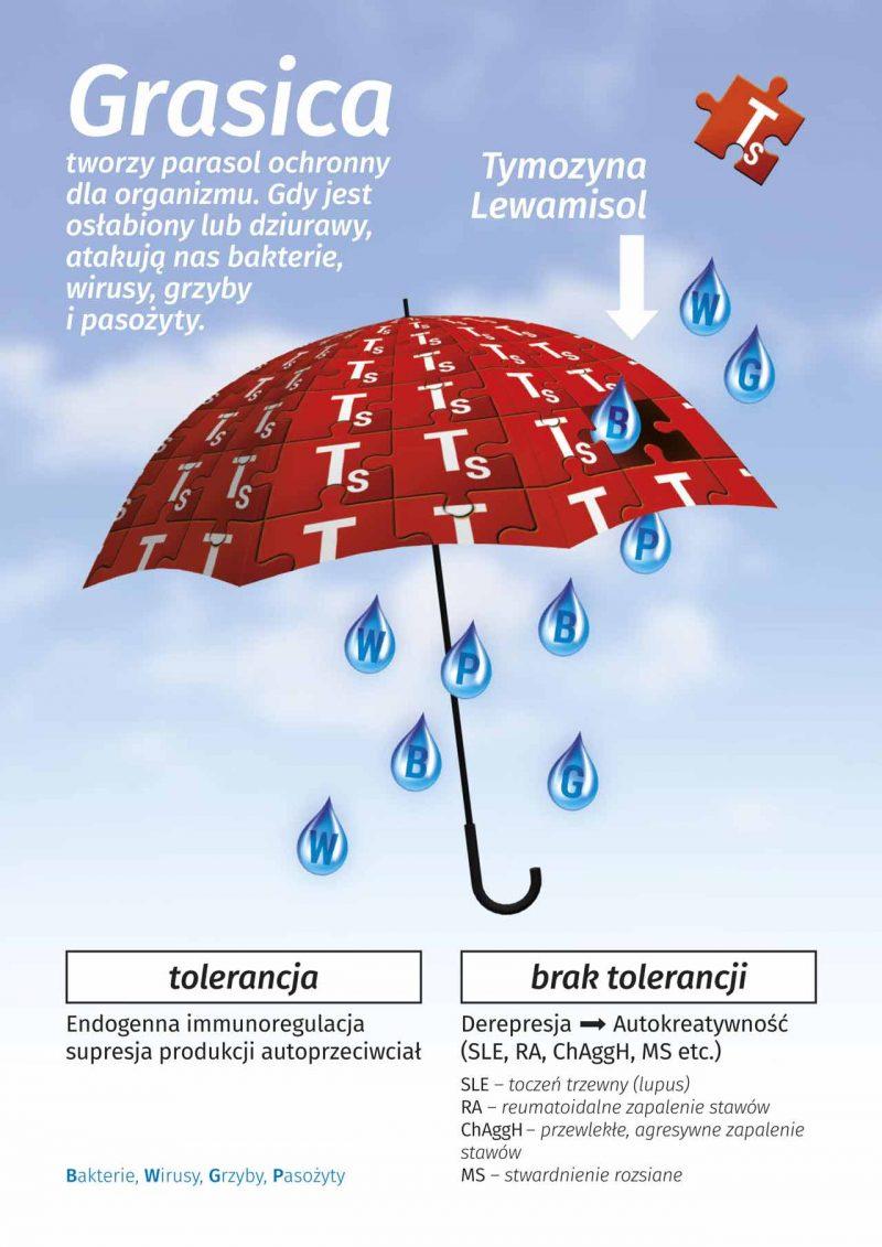 Grasica - parasol ochronny dla odporności organizmu